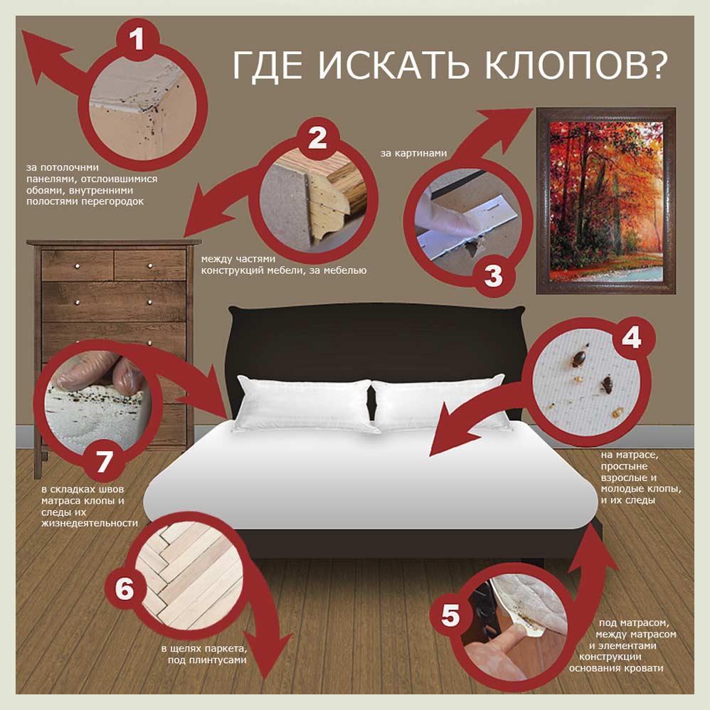 Как избавиться от постельных клопов в квартире самостоятельно