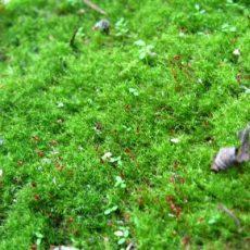 Как избавиться от мха, если он растет на газоне?