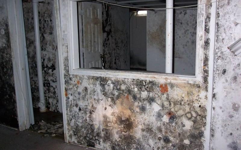 Как избавиться от черной плесени на стенах в квартире?