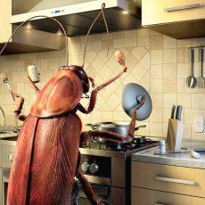 Как потравить тараканов борной кислотой?