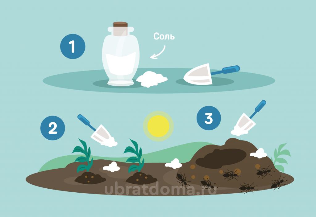 Что будет, если рассыпать соль вокруг муравейника?