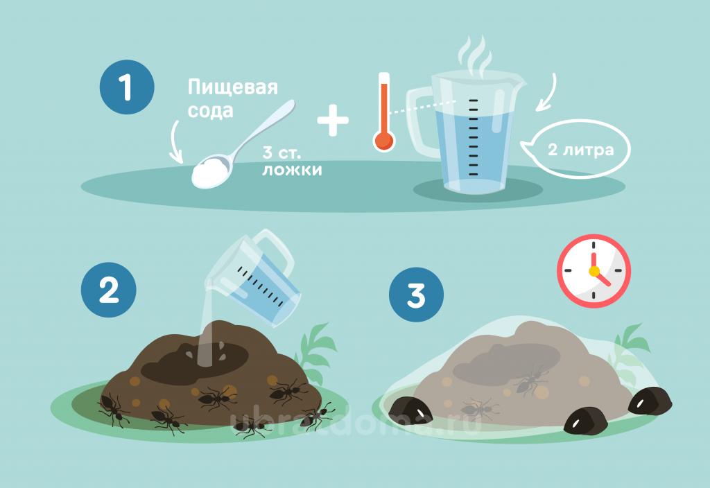 Как из пищевой соды приготовить эффективное средство от муравьев?