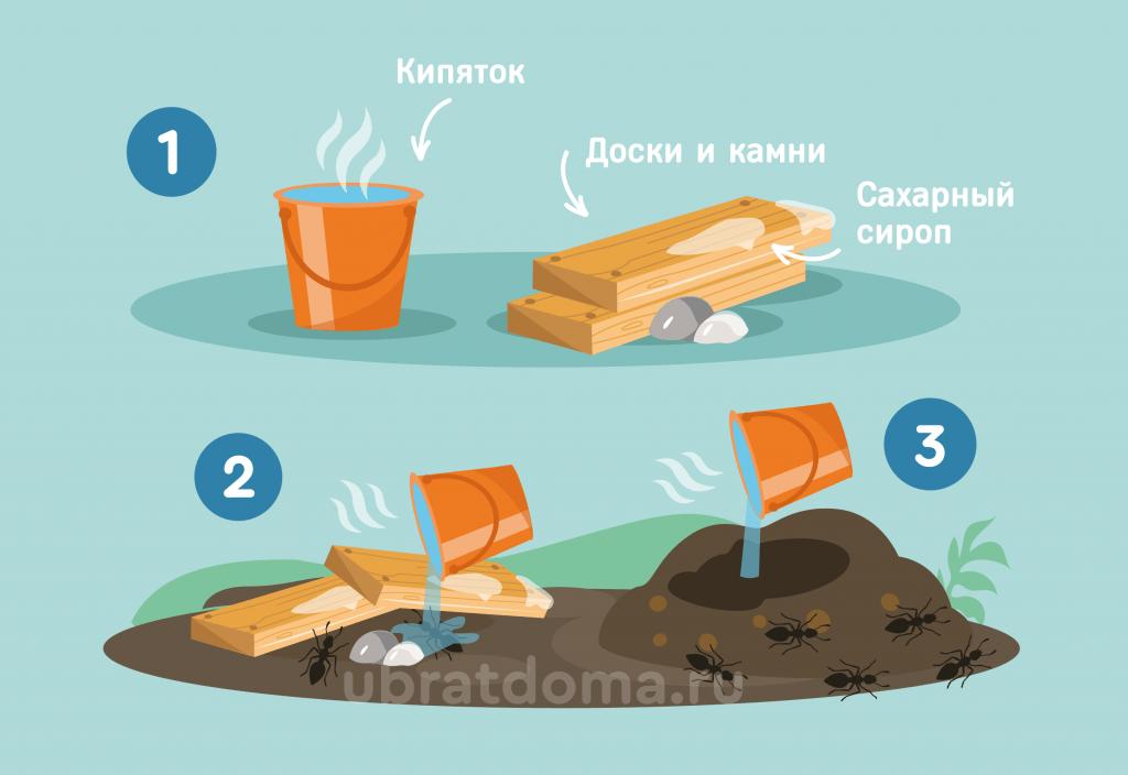 Как с помощью кипятка, деревянной доски и сахарного сиропа можно нейтрализовать муравейник?