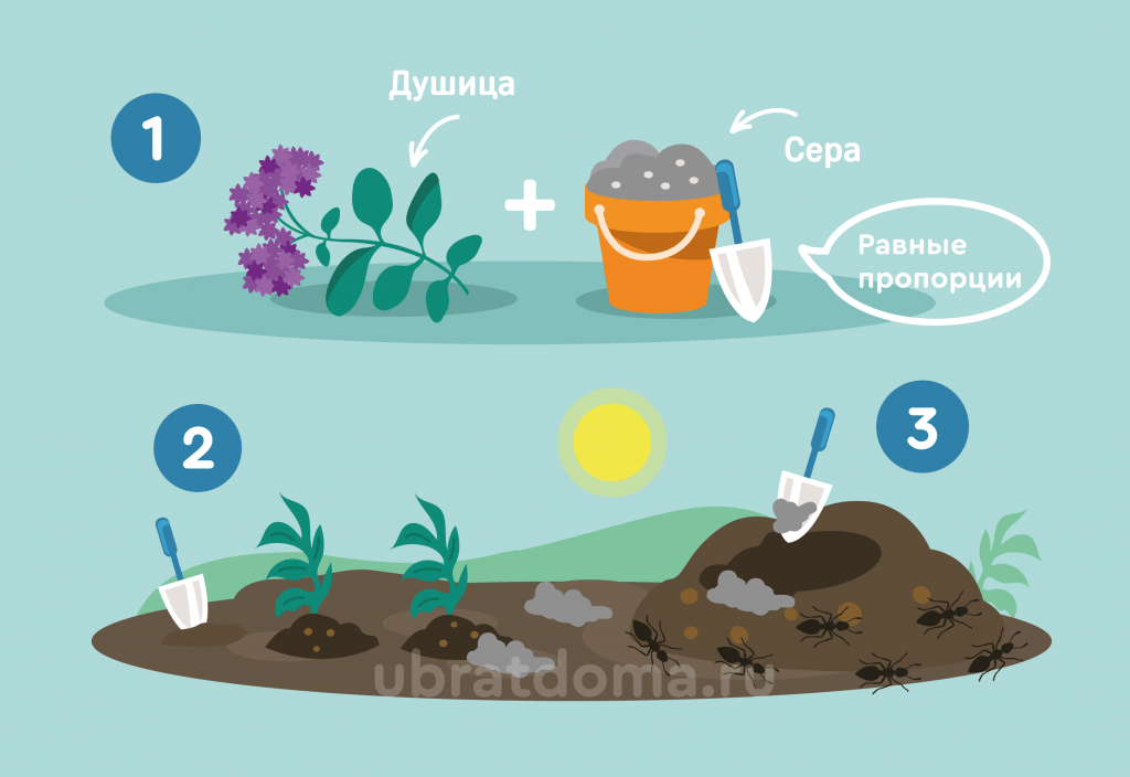 Как вывести мурашек с помощью серы и душицы?