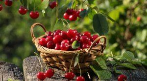 Как отстирать пятно от вишни?