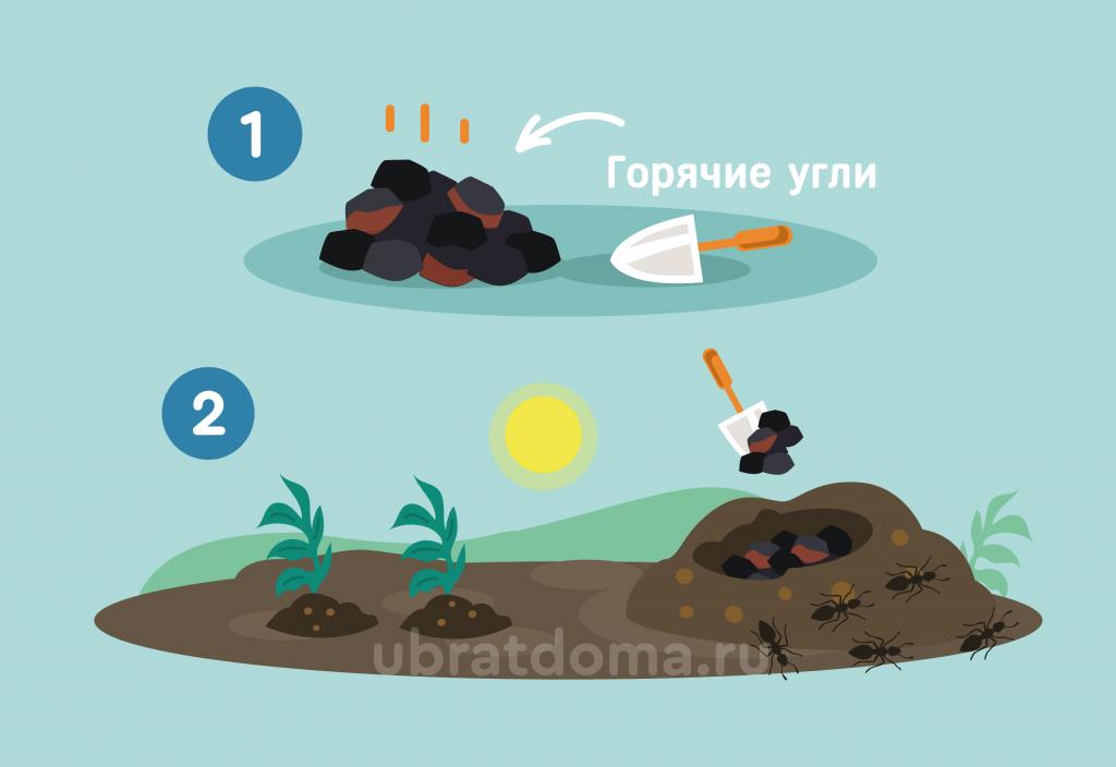 Реально ли с помощью горячих углей вывести муравьев с участка?