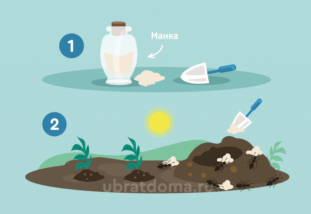 Реально ли с помощью обычной манки избавиться от муравьев?