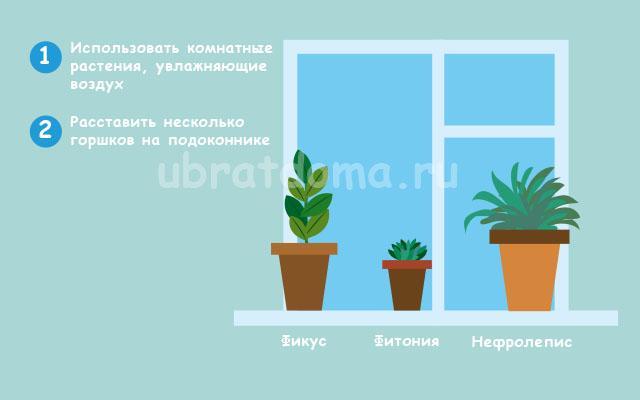 Используйте комнатные растения, увлажняющие воздух