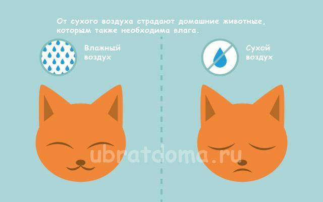 От сухого воздуха страдают домашние животные