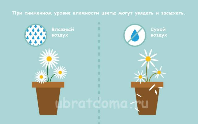 Вред для комнатных растений
