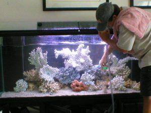 Как правильно чистить аквариум с рыбками в домашних условиях?