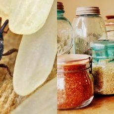 Жучки в крупе - как избавиться от них на кухне и чем обработать полки?