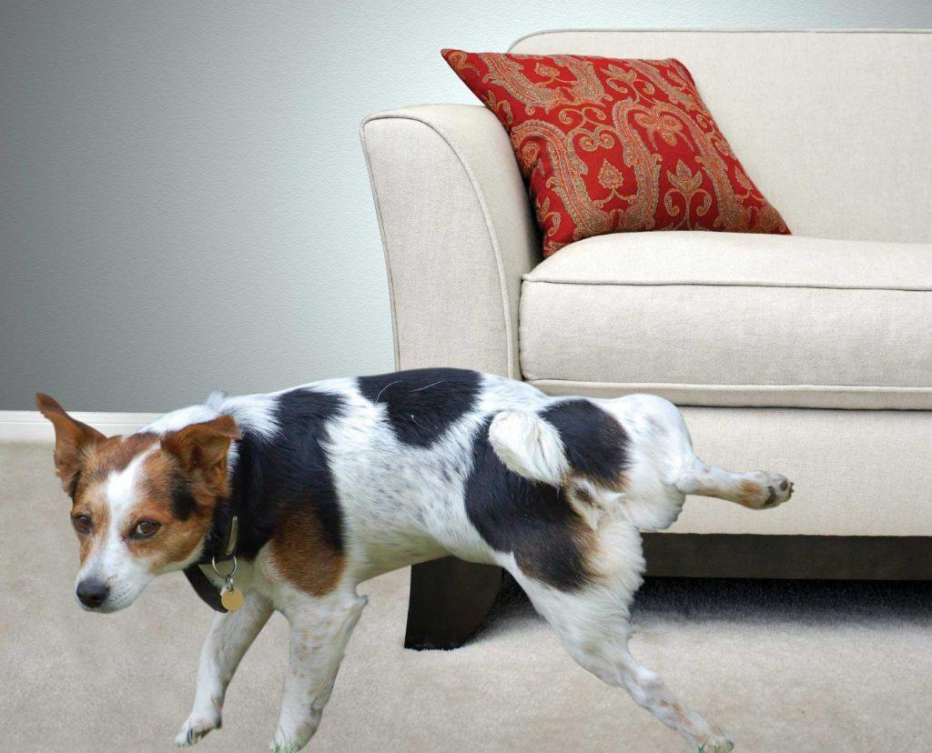 Как вывести запах животных с мебели
