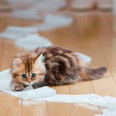 Как вывести запах кошачьей мочи с одежды в домашних условиях?