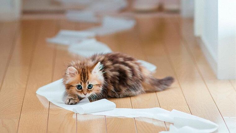 Как убрать запах кошачьей мочи с ковра: обзор самых