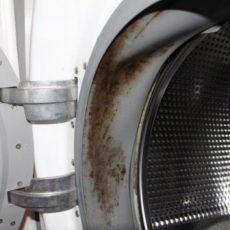 Грибок на манжете в стиральной машине