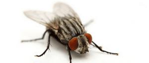 Как избавиться от мух в квартире и мушек в земле комнатных растений?