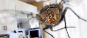 Как вывести мух?