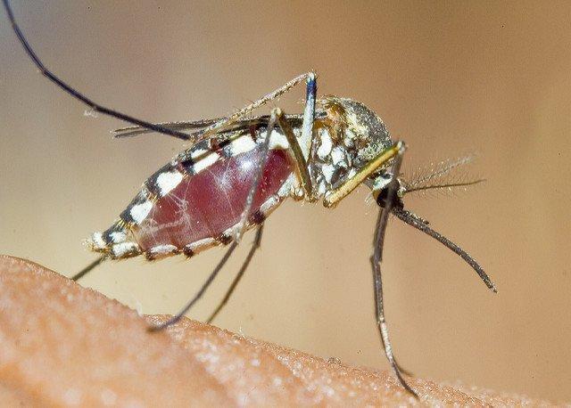 Как избавиться от комаров в квартире в домашних условиях?