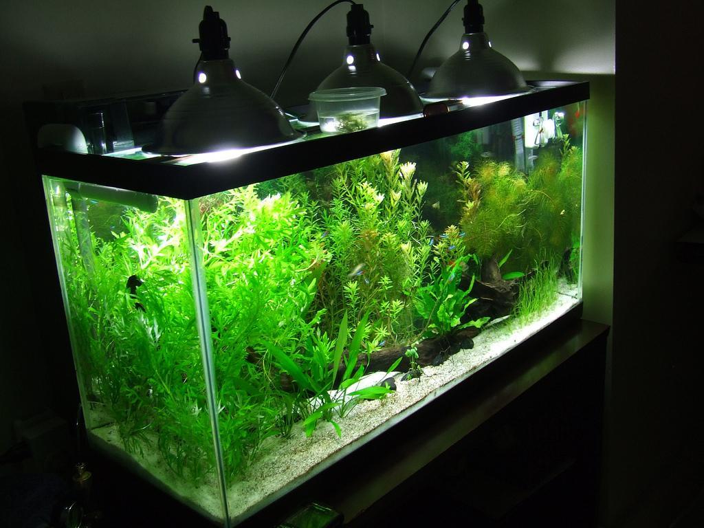 Освещение в аквариуме